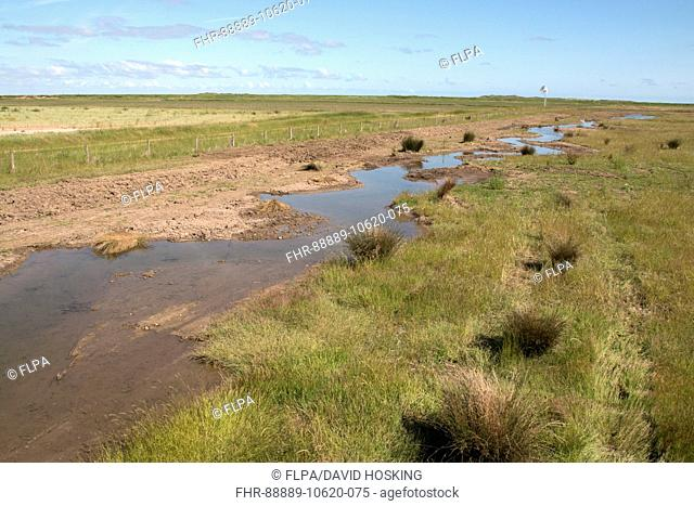Freshly dug channels allow spring water to flow out onto Deepdale Marsh, Burnham Deepdale, North Norfolk