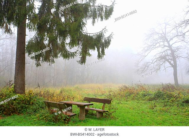 seat group in autumn mist, Germany, Baden-Wuerttemberg