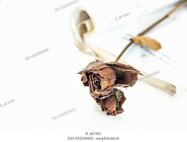 Dried rose on white isolate background for design or decorate project