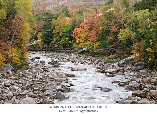 East Branch of the Pemigewasset River near the Lincoln Woods Visitor Center during the autumn months in Lincoln, New Hampshire USA