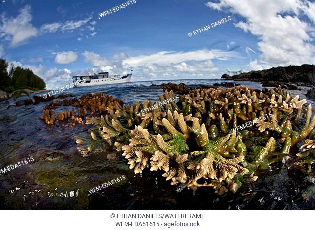 Reef Top out of water during low tide, Russell Islands, Solomon Islands