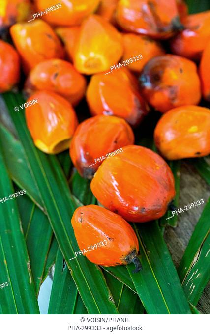 Palm nuts, fruit of the oil palm