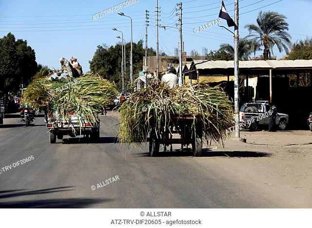 MEN ON TOP OF SUGAR CANE TRUCK; NEAR ASWAN, EGYPT; 11/01/2013