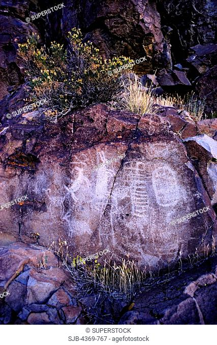 Petroglyphs in Renegade Canyon, Coso Mountains, California. Iny-8 was the handiwork of many individuals over thousands of years