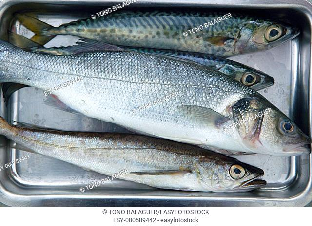 Sea bass, hake fish and mackerel fishes on stainless steel tray