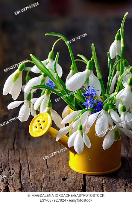 Bouquet of snowdrops in small watering can on wooden table