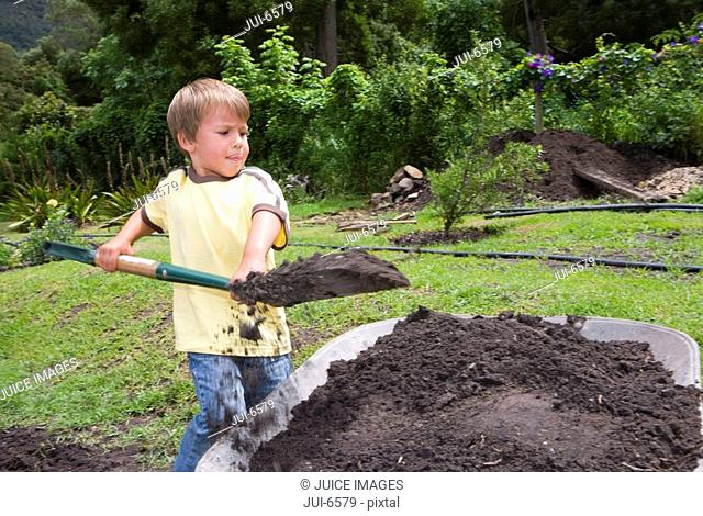 Boy 4-6 using spade to fill wheelbarrow with soil in garden