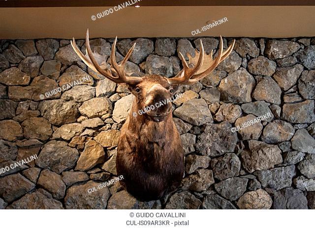 Moose head mounted on stone wall