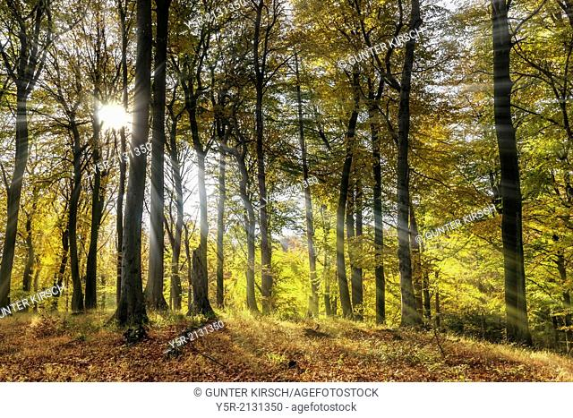 Forest in the autumn, the sun shines through the trees