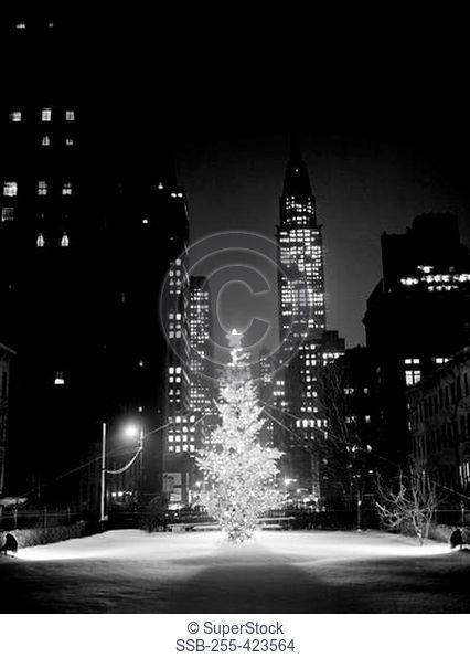 USA, New York City, Christmas tree in street at night