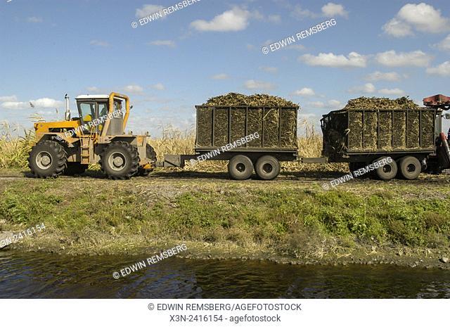 Florida, USA - Sugar cane harvest