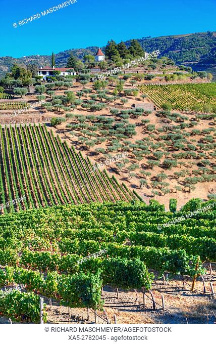 Vineyards, Quinta do Crasto, Alto Douro Wine Valley, UNESCO World Hertiage Region, Portugal