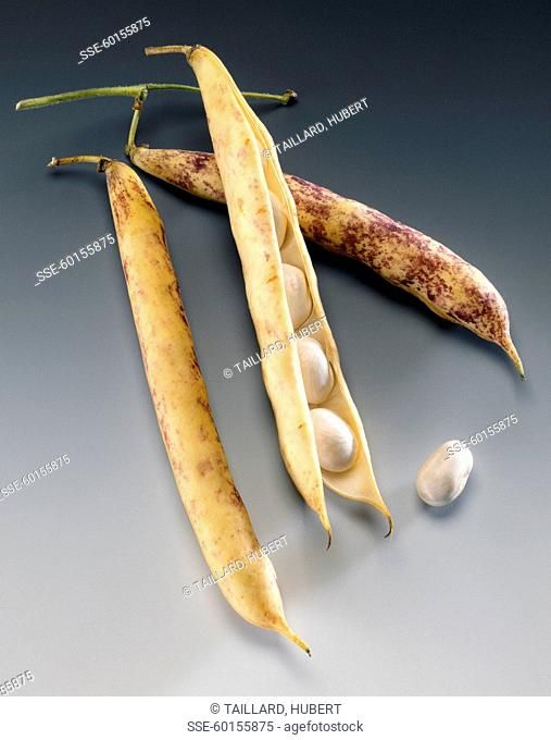Paimpol haricot beans