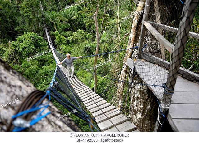 Suspension bridge between tall tropical trees of the Amazon rainforest, Jungle Lodge Estancia Bello Horizonte, Puerto Maldonado, Madre de Dios department, Peru