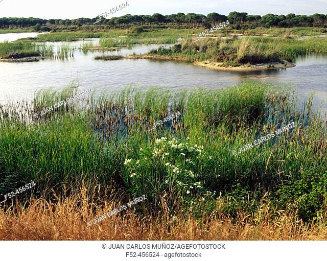 Laguna El Acebuche. Doñana National Park. Huelva. Andalucia. Spain
