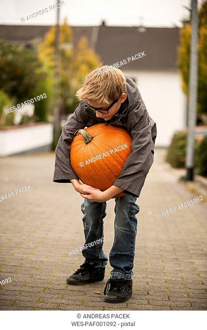 Boy trying to carry a big pumpkin