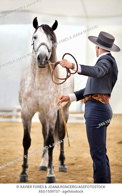 Winner of the Morphological competition of Pure Spanish Horse, Equus Fair 2011, Girona, Spain