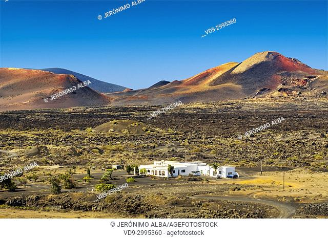 Vineyards growing on volcanic ashes. La Geria region. Lanzarote Island. Canary Islands Spain. Europe