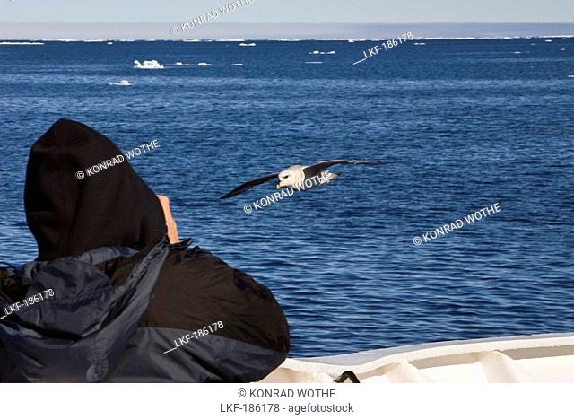 tourist photographing fulmar on board of an Expedition ship, Spitsbergen, Norway