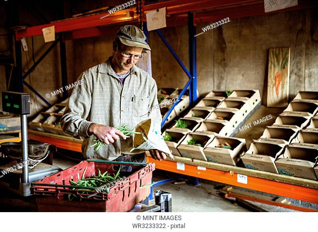 Farmer standing in a farm shop, weighing and bagging fresh green beans