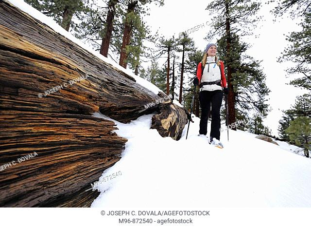 Woman snowshoe by felled tree, Mount Pinos, California, USA