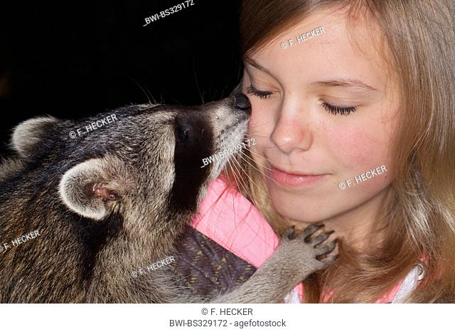 common raccoon (Procyon lotor), gentle young animal playing and smooching with a girl, Germany