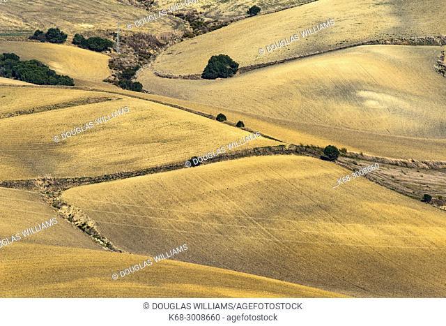 Landscape near Vejer de la Frontera, Cadiz province, Spain