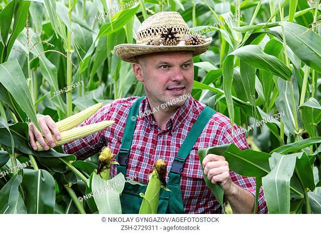 Russia. Belgorod region. Male farmer in a corn field