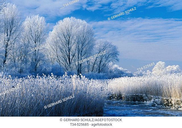 Winter Scenery. Trees. Mecklenburg-Vorpommern, Germany