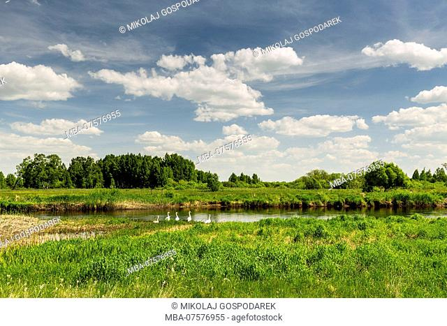 Europe, Poland, Podlaskie Voivodeship, Jasionowo - Biebrza river