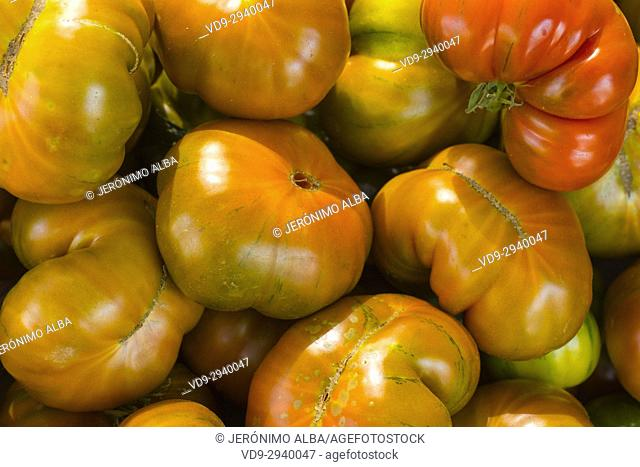 Raf tomatoes. Close view. Farmers market