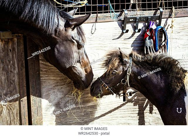 A horse and a pony looking at each other in a stable