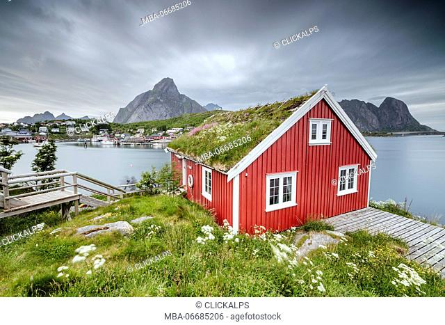 Green grass and flowers frame the typical Rorbu surrounded by sea Reine Nordland county Lofoten Islands Northern Norway Europe