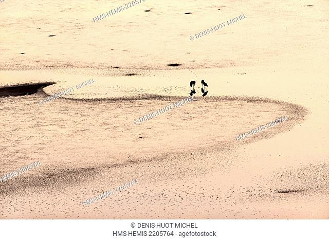 Kenya, Magadi lake, Marabou stork (Leptoptilos crumeniferus), at sunrise, aerial view