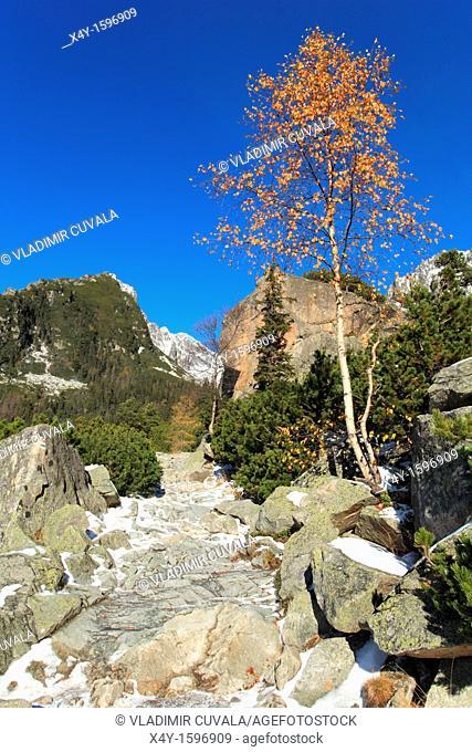 The hiking path to Zamkovskeho chata in Mala Studena dolina, High Tatras, Slovakia