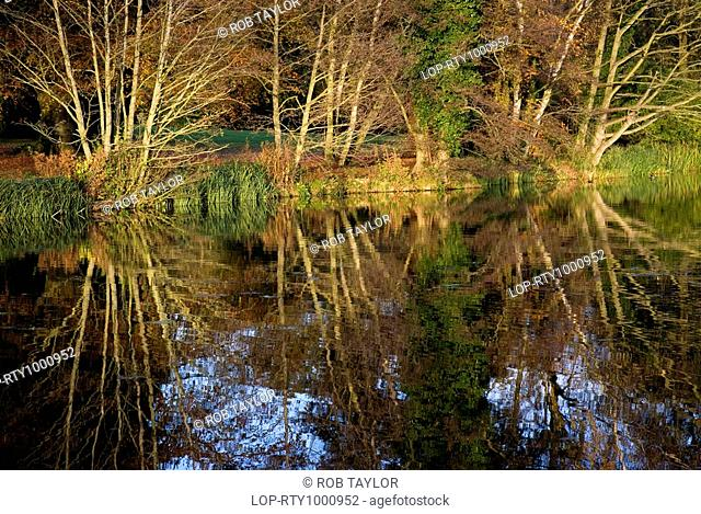 England, Surrey, Waverley Abbey, Trees on a riverbank reflected in the River Wey by Waverley Abbey