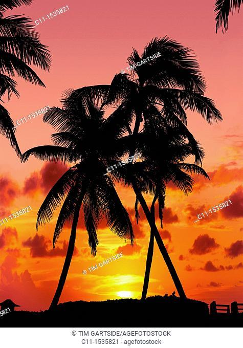 naples orange sunset with palm trees florida usa
