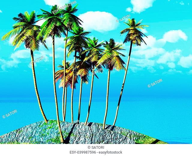 Coconut grove on tropical tiny island