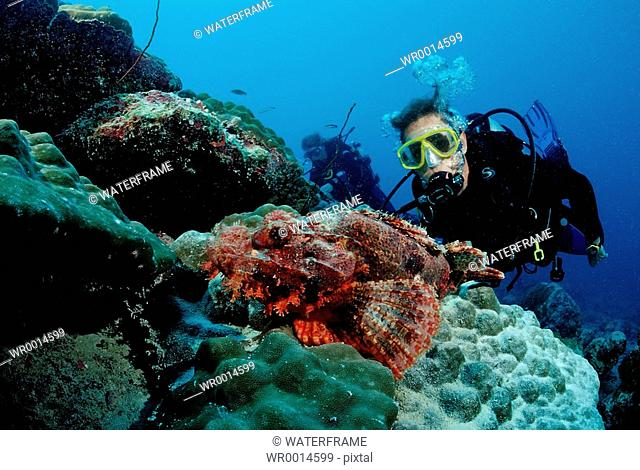 Diver and Scorpianfish, Scorpaenopsis oxycephala, Indian Ocean, Maldives