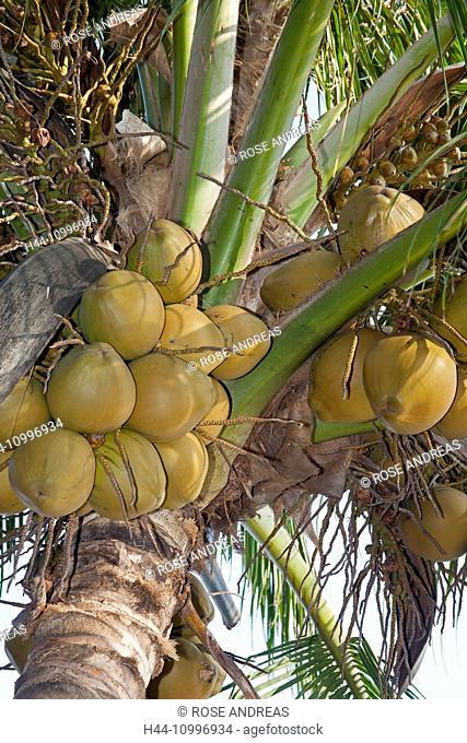 Coconut tree on the beach of Rangbeach, Danang, Asia