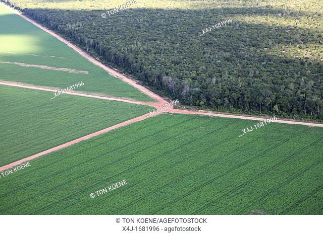 Destruction of the Amazon forest, Brazil