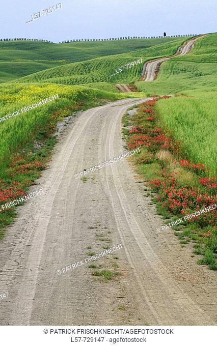 Unpaved road leading through hill countryside, wheat field, crop, Rape, agricultural landscape, Tuscany, Italy