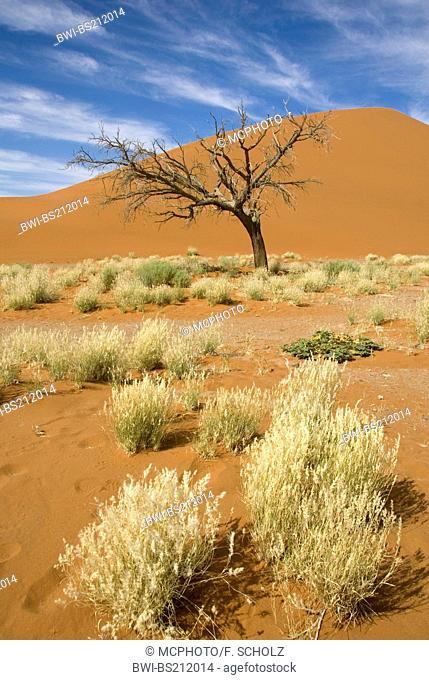 namib desert; dune 45 near Sesriem, Namibia