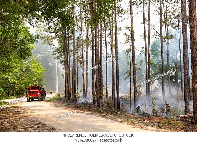Florida Park Service staff execute a prescribed burn in the pine flatwoods of Highlands Hammock State Park in Sebring, Florida