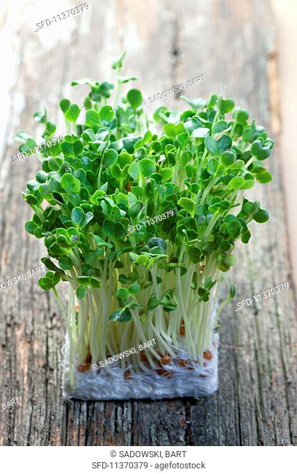 Organic alfalfa sprouts on a wooden table