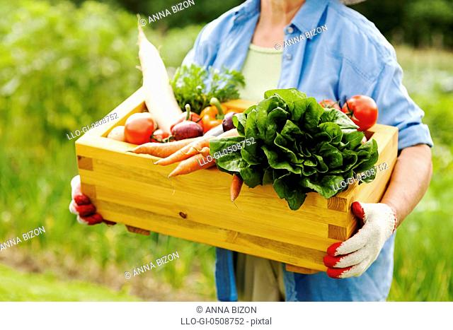 Senior woman holding box with vegetables Debica, Poland