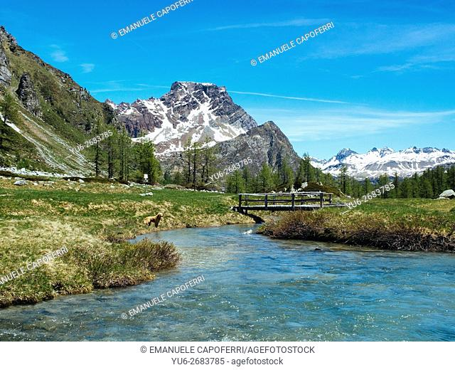 Rio Buscagna in Val Buscagna, Alpe Devero, Lepontine Alps, Piedmont, Italy