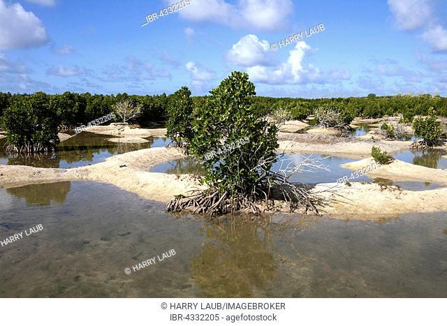Landscape with mangroves, near Mahebourg, Mauritius