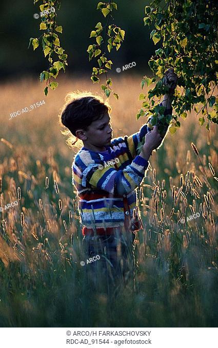 Boy 9 years under birch in evening light Bavaria Germany