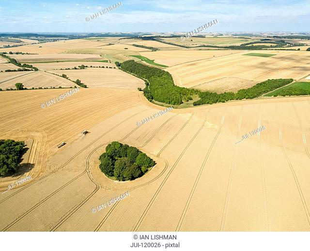 Harvest aerial landscape of combine harvester cutting summer wheat field crop and tractor trailer on farm